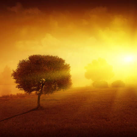 Landscape with lonely tree and foggy sunset  photo