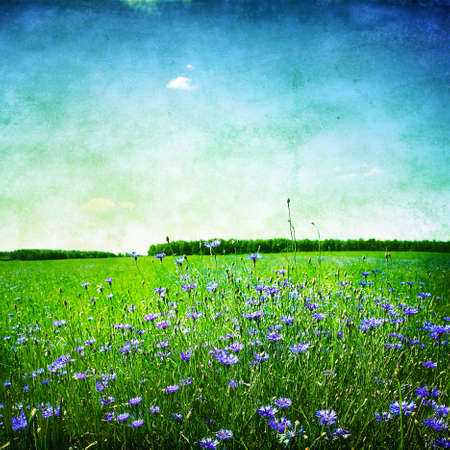 Landscape with cornflowers in the field.Grunge photo photo