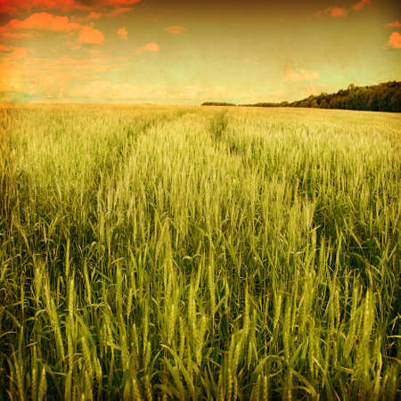 Wheat field with road in grunge and retro style. photo