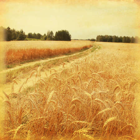 vintage: Landweg in tarwe veld in grunge en retro stijl.
