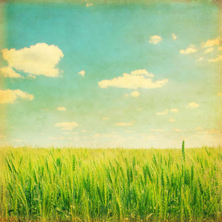 Vintage effect of wheat field under blue sky. photo