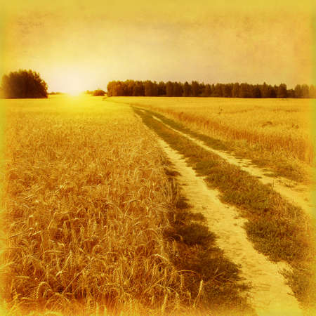 Wheat field with road  Grunge and retro style  photo