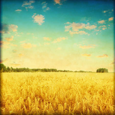 non urban: Ripe wheat field at sunset in grunge and retro style  Stock Photo