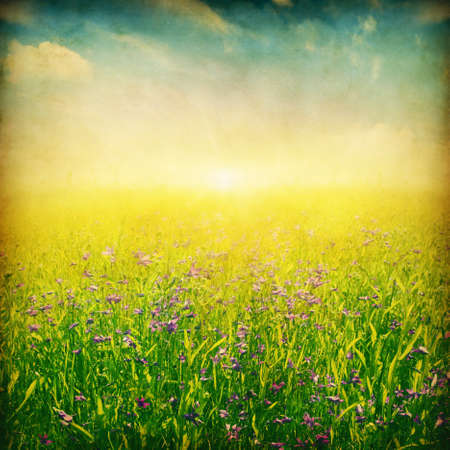 Wildflower field at sunset.Grunge and retro style. photo