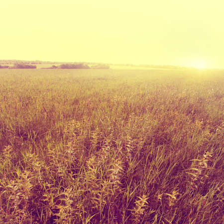 'retro styled': Summer field at sunset in vintage style   Stock Photo