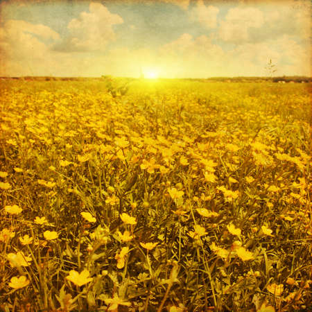 Field of spring flowers, blue sky with clouds and sun. Grunge image. photo