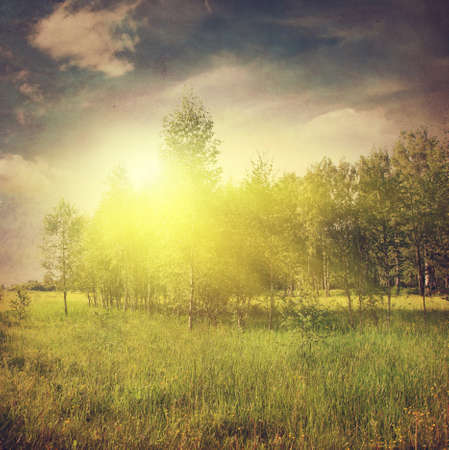 non cultivated: Grunge image of summer landscape at sunset