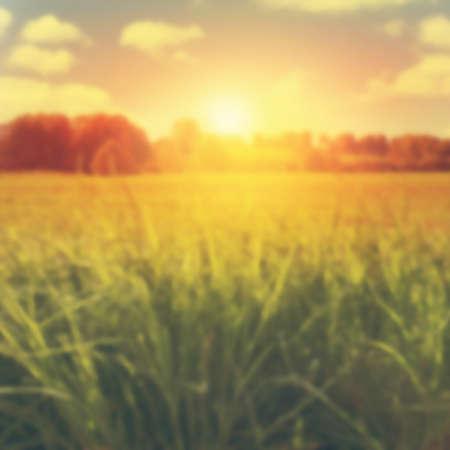 grass: Blurred image of summer landscape at sunset.
