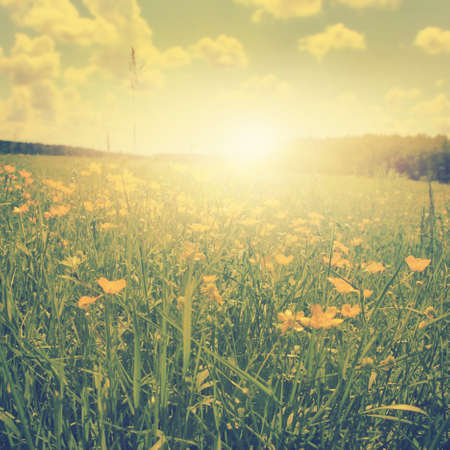 flower fields: Field of spring flowers at sunset in vintage style. Stock Photo