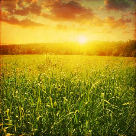 grunge image: Grunge image of summer landscape at sunset.
