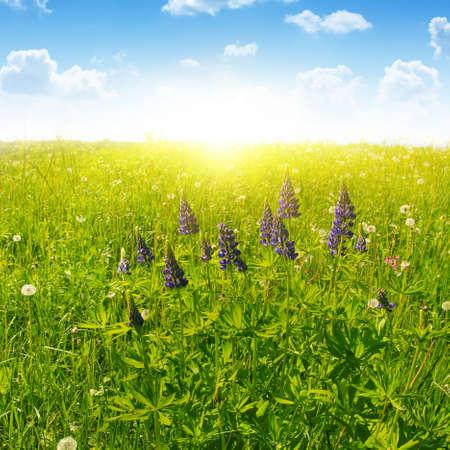 blue summer sky: Summer field, blue sky and sunlight. Stock Photo