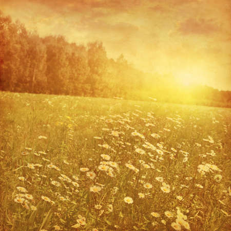 Daisy-Feld bei Sonnenuntergang im Grunge und Retro-Stil.