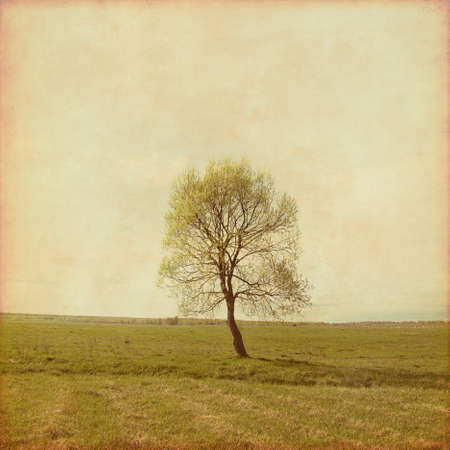 Lonely tree in the field in grunge and retro style. Stock Photo