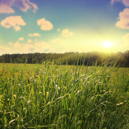 field sunset: Green grass field at sunset in vintage style. Stock Photo