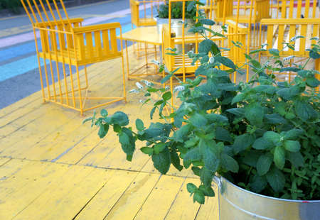 mentha: Mint in a tin bucket with yellow table and chairs on the summer terrace. Mint in a tin bucket on the street.Yellow table and chairs on the street.