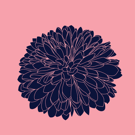 Vector handdrawn dark blue chrysanthemum. Isolated on pink background.  イラスト・ベクター素材