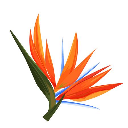 Strelitzia flower. Single isolated tropical plant, realistic vector illustration.