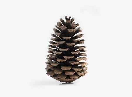 Big cone isolated on grey background. Christmas mood.