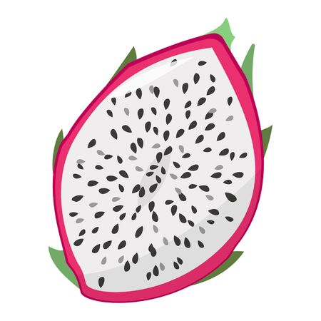 Isolated vector illustration on white background. Dragon fruit. Half of the cut fruit. 向量圖像