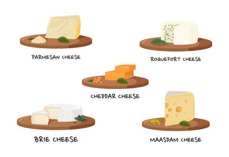 Various types of cheese. Realistic meal vector collection. 矢量图像