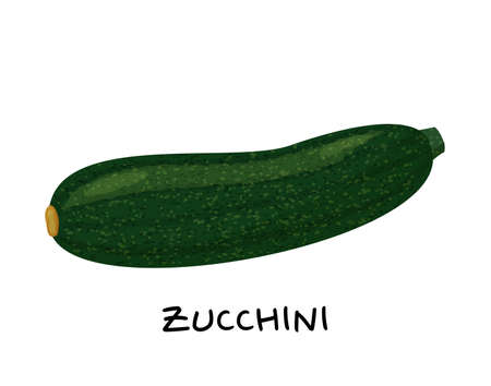 Zucchini vector Illustration. Realistic vector isolated on white background.