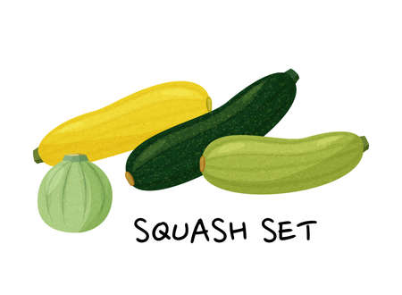 Green and yellow squashes set isolated on white background. Vector realistic collection.