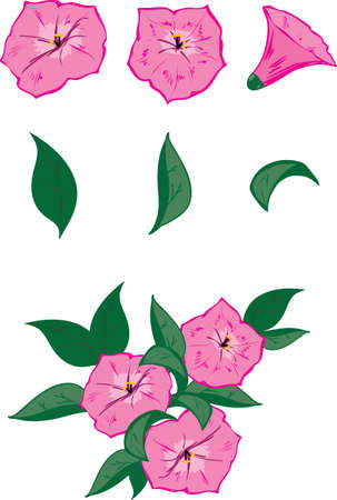 petunia: Vector objects for drawing up own flower compositions  3 pink flowers of a petunia and 3 leaves  And also an example of possible composition