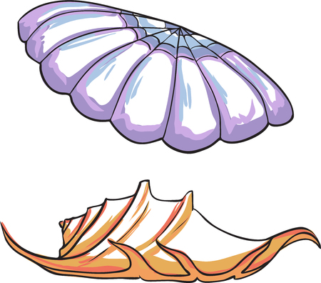 pale color: Two variants of sea shell. Vector, pale color palette
