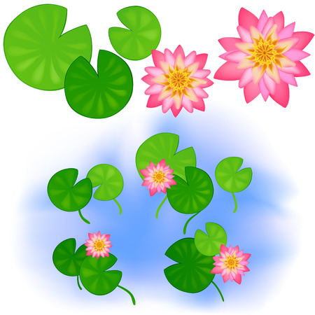 lily flowers collection: Japanese or Chinese flowers. Clear pond with rose water lotus and leaves. Up view. Vector color cartoon.