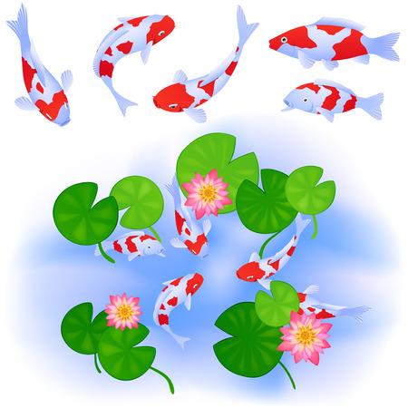 Temas japoneses o chinos. Las carpas Koi nadan en un estanque claro con agua, loto y hojas. Conjunto de cinco peces. Arriba vista. Vector de dibujos animados de color.
