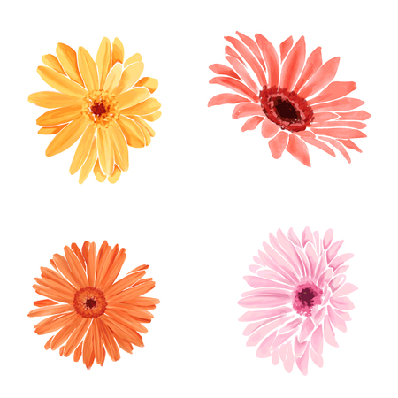 Set watercolour bright gerberas. Isolated flower on white background.