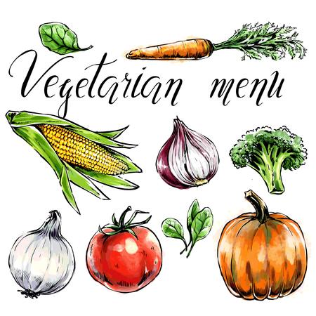 Ensemble de légumes : c Alimentation saine pour les soins de santé et menu végétarien. Épinards à l'aquarelle à main levée, carotte, maïs, tomate, citrouille, brocoli. Illustration vectorielle. Contour noir, objet isolé Vecteurs