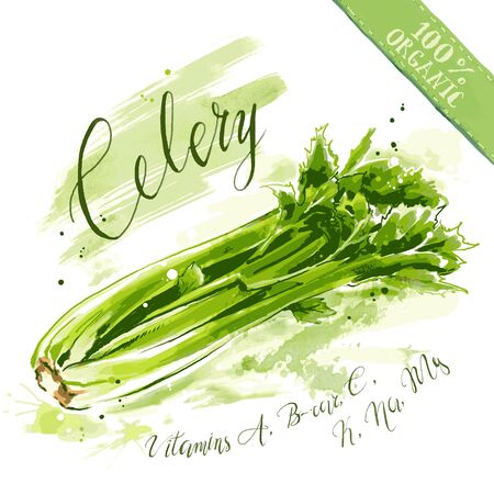 Watercolor vegetable with splashes and lettering. Organic health food for vegetarians and health care. Freehand drawing of  raw celery.
