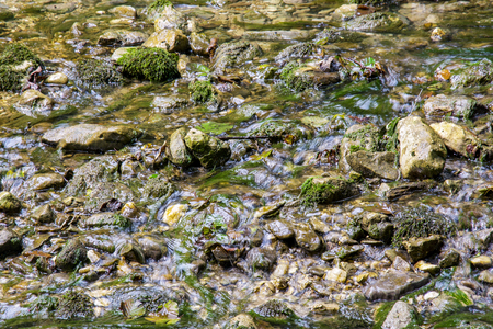 cold winding mountain river with hummocks and green moss Imagens
