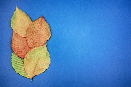 Autumn multicolored leaves on a blue background. copy space