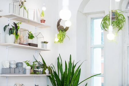 Mini florarium with green plants hanging on a wire with white lights in a bright interior. The living garden. Phytodesign.