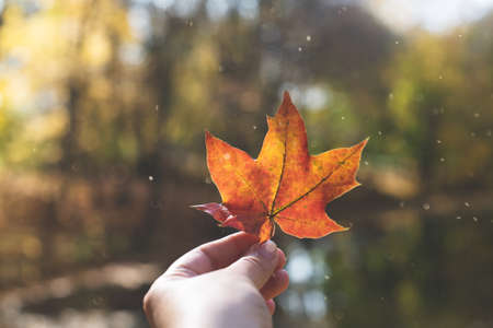 A red maple leaf is held by a hand against the background of a cozy autumn landscape.