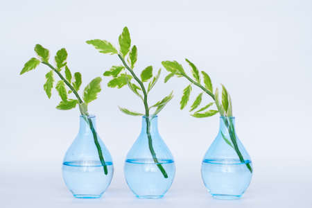Home plants in vases for study in the laboratory. Concept of ecology.