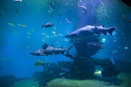 危険なサメと水槽の中の魚