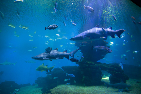 Gevaarlijke haaien en vissen in een aquarium Stockfoto