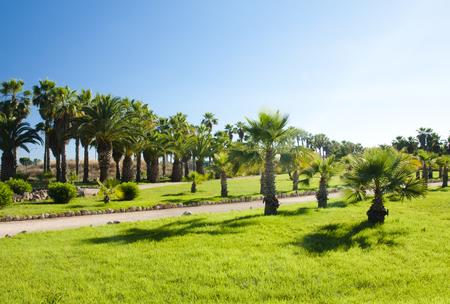 Palms in cactus garden at island Majorca, Balearic Islands, Spain