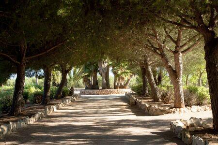 Alley in cactus garden at island Majorca, Balearic Islands, Spain