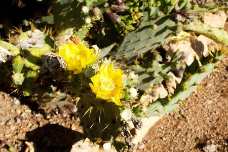 mallorca: Cactus garden at island Majorca, Balearic Islands, Spain