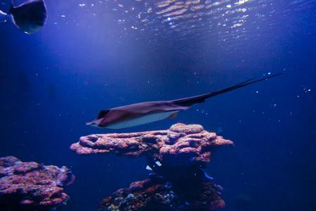 aquarium hobby: Colorful exotic tropical fishes and sharks underwater in aquarium