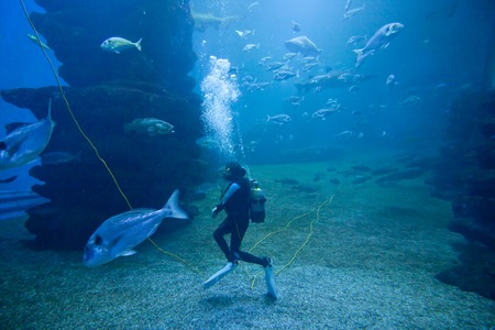 Diver with colorful exotic tropical fishes and sharks underwater in aquarium