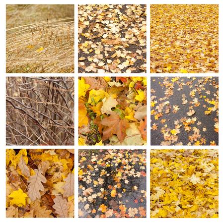collage de otoño que muestra diferentes imágenes de otoño y texturas
