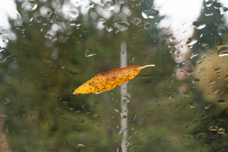 Autumn weather with a yellow leaf on a wet window after the rain in the fall in october 版權商用圖片