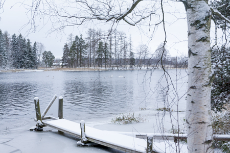 Winter calm landscape on a river with a white swans and pier. Finland, river Kymijoki. 版權商用圖片