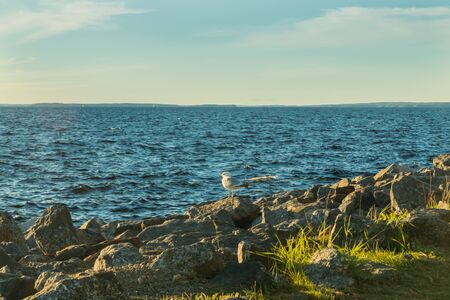Seagull on the coast of lake Nasijarvi at sunset in Tampere, Finland