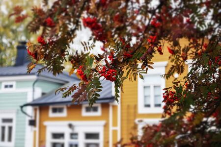Street of Old Porvoo, Finland. Beautiful city autumn landscape with rowan and colorful wooden buildings.